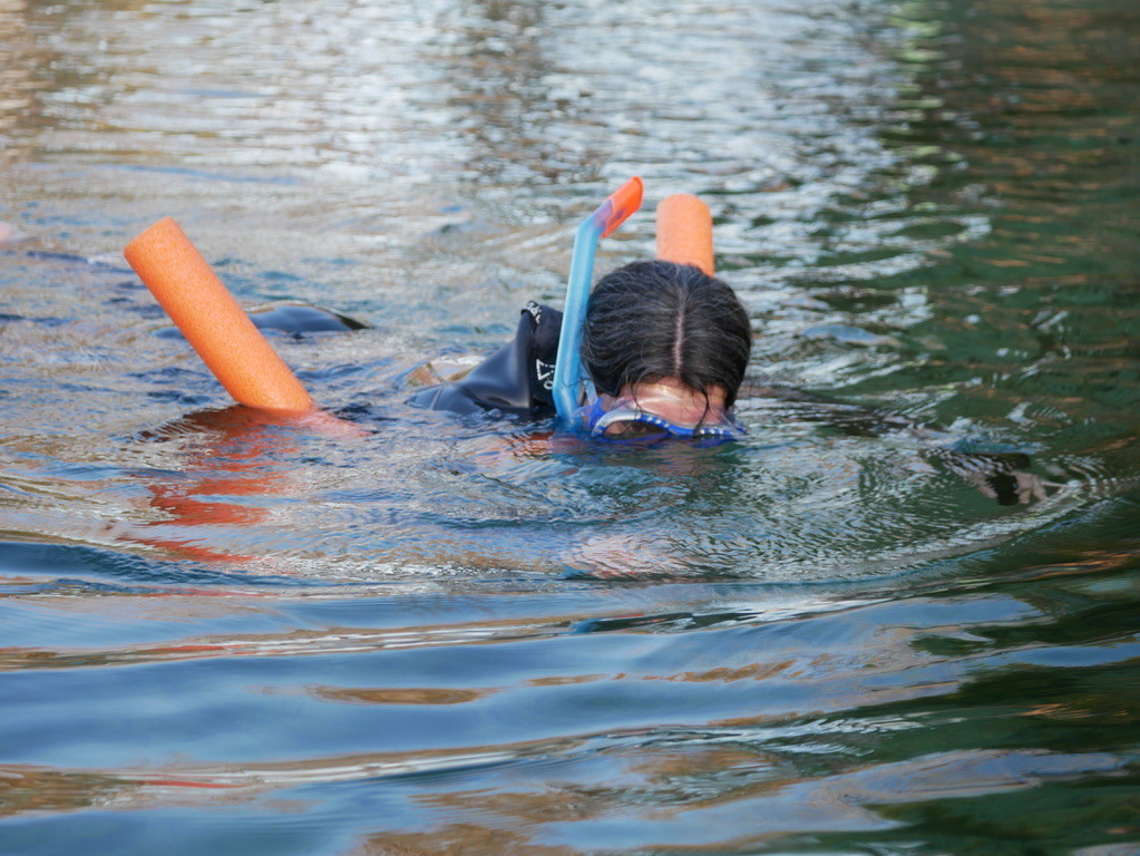 Female snorkeling at Three Sisters Springs and swimming with manatees