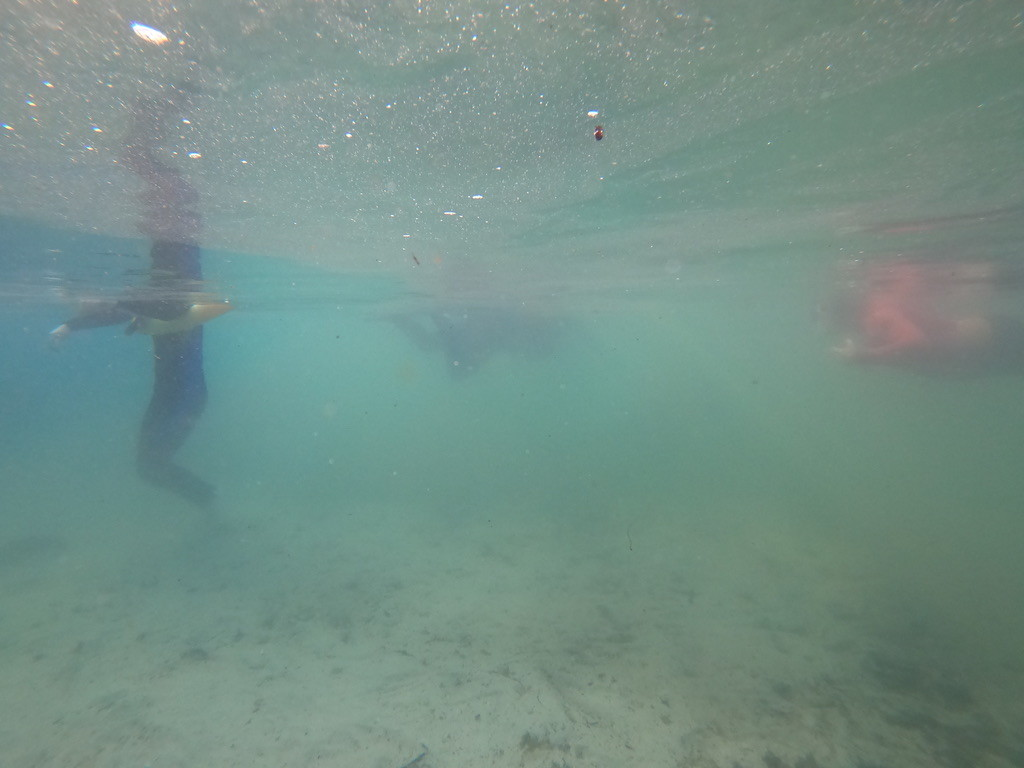 Murky water at Three Sisters Spring in Crystal River, Florida. Swimmers swimming with manatees.