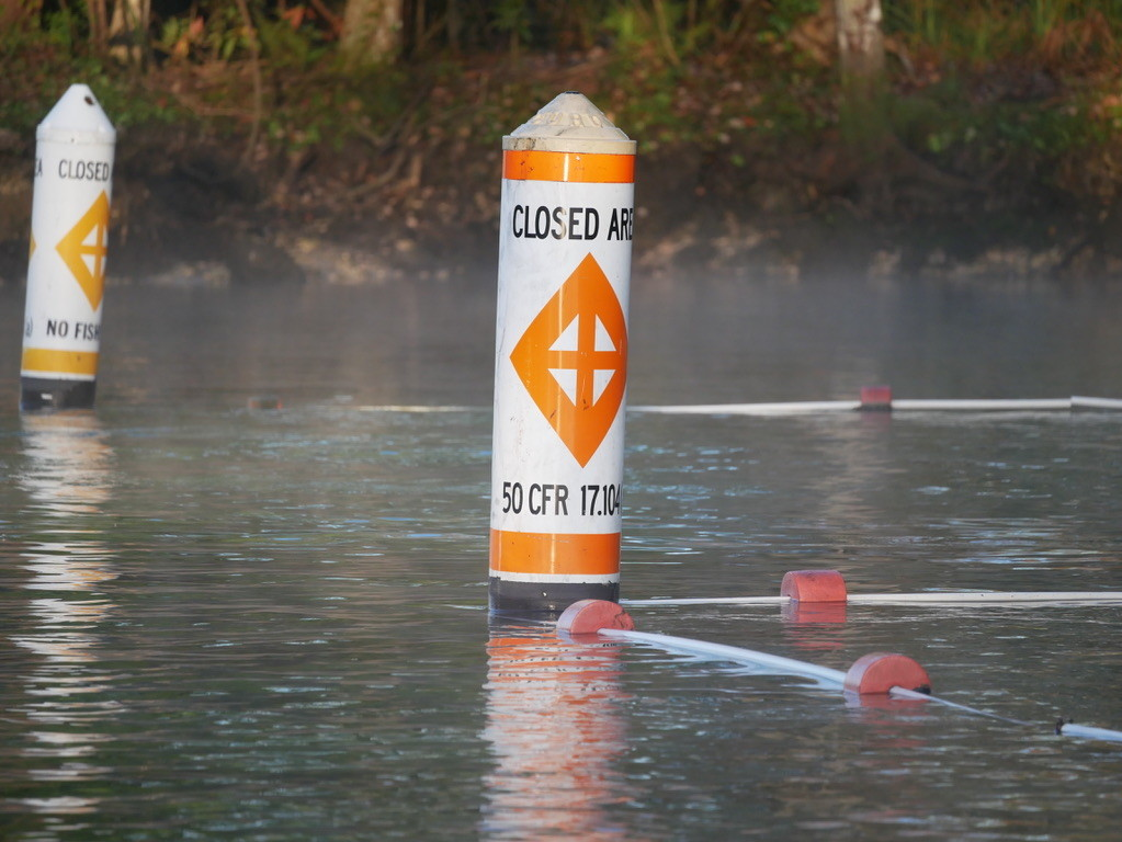 Area closed off to swimmers to protect the manatees from humans are clearly marked.